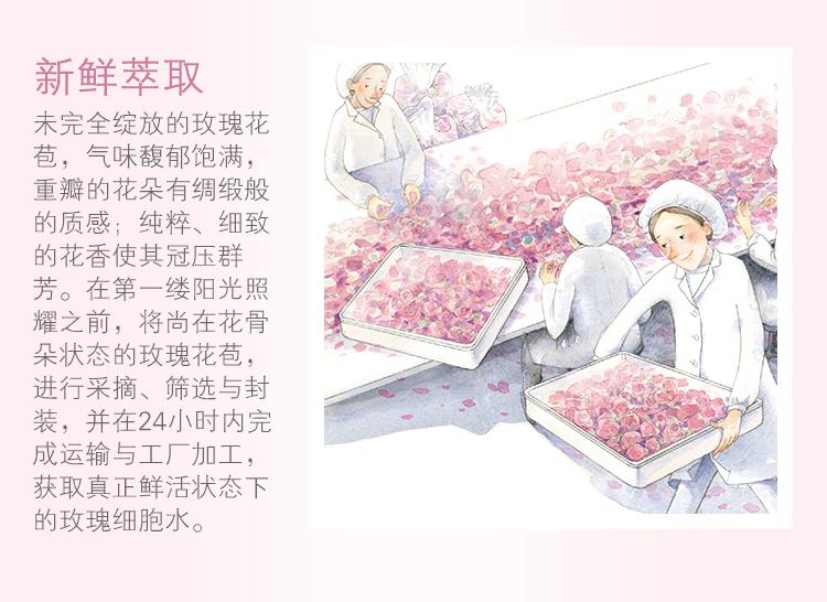 秘密花园玫瑰鲜活水 体验装