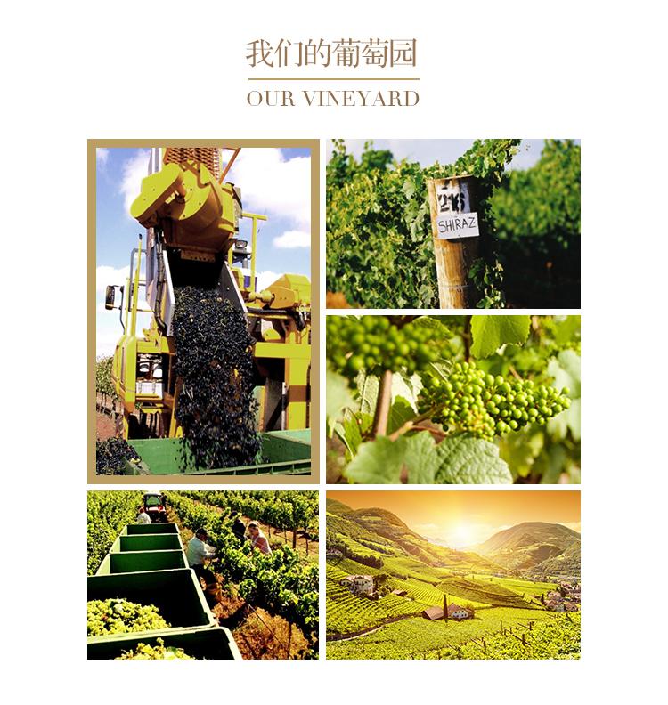 驼峰霞多丽干白葡萄酒