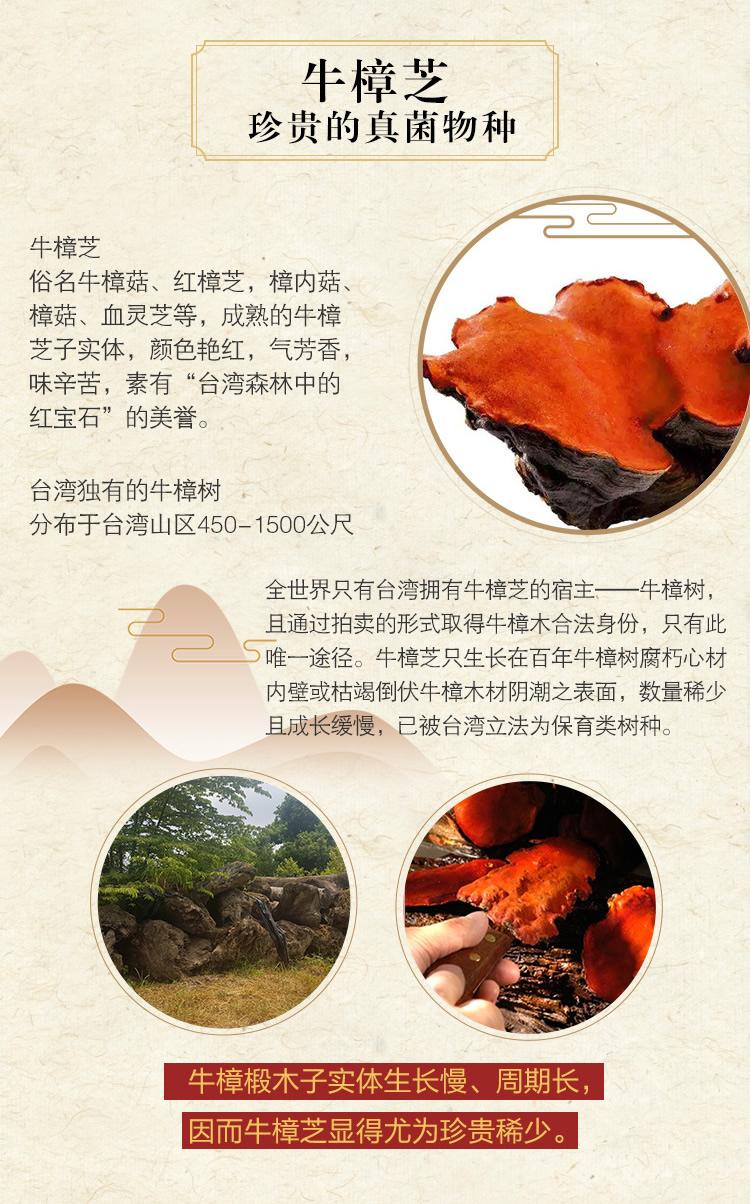 吴麓山堂牛樟菇